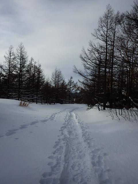 蓼科山登山道