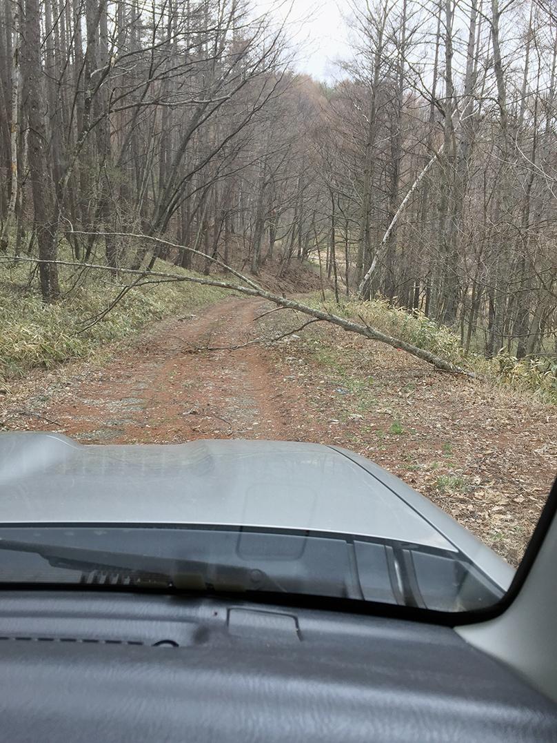 女山登山道に向かう林道
